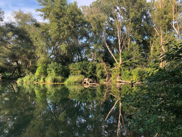 Pihenjünk meg a Kukkónia erdőben!